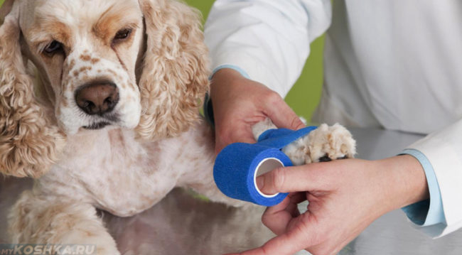 Фиксирующая повязка для собаки
