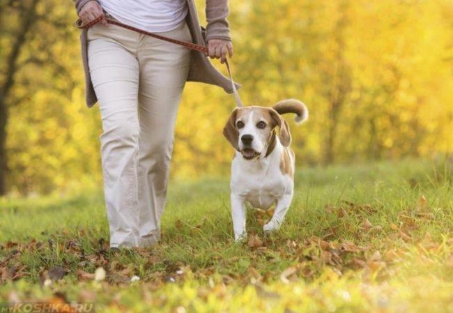 Прогулка с собакой в парке