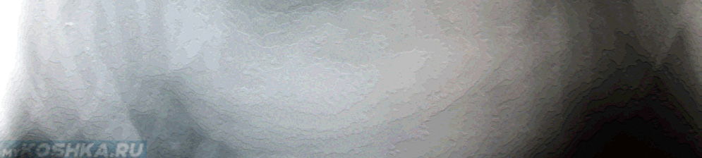 Снимок пиометра у собаки рентген