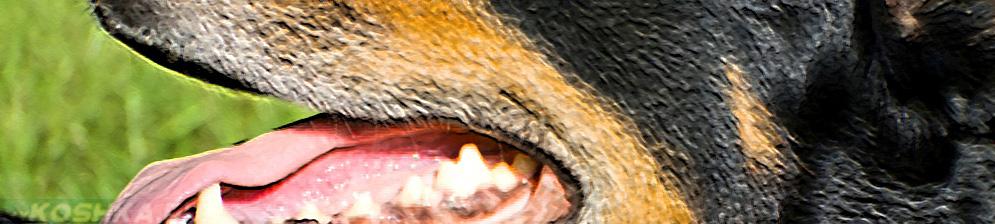Осмотр пасти у собаки