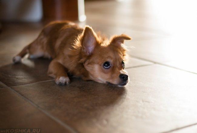Щенок лежащий на полу в комнате