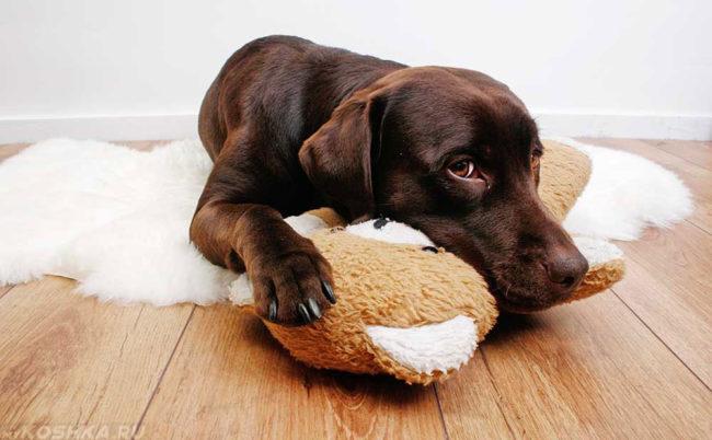 Собака лежащая на игрушке
