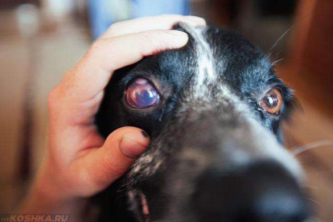 Собака с открытыми глазами и рука