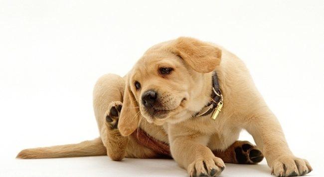 Собака поднявшая заднюю лапу