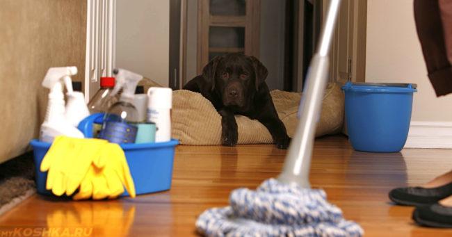 Мытьё полов шваброй и собака