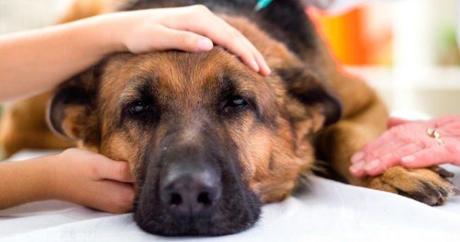 Лежащий пёс и руки гладящие пса