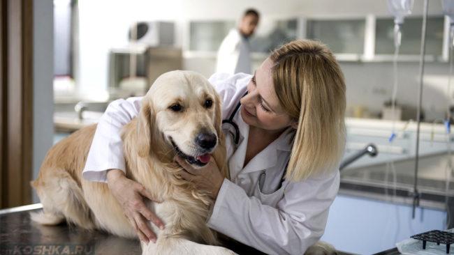 Собака на столе и женщина