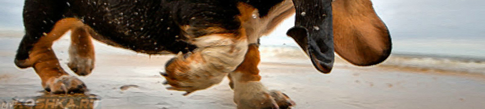 Собака хромает на переднюю лапу