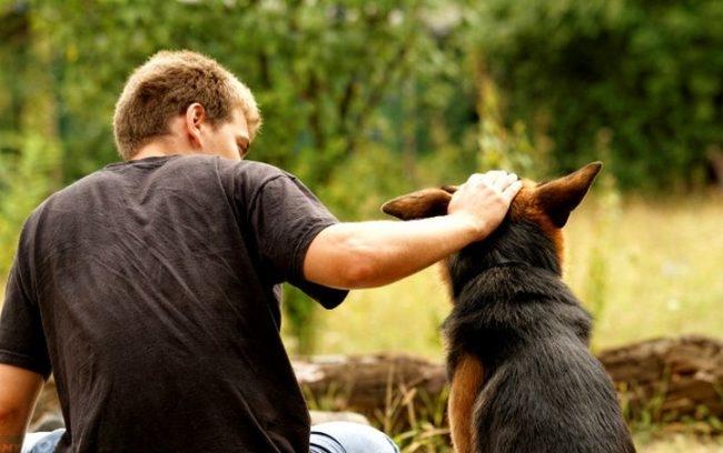 Человек гладящий собаку по голове