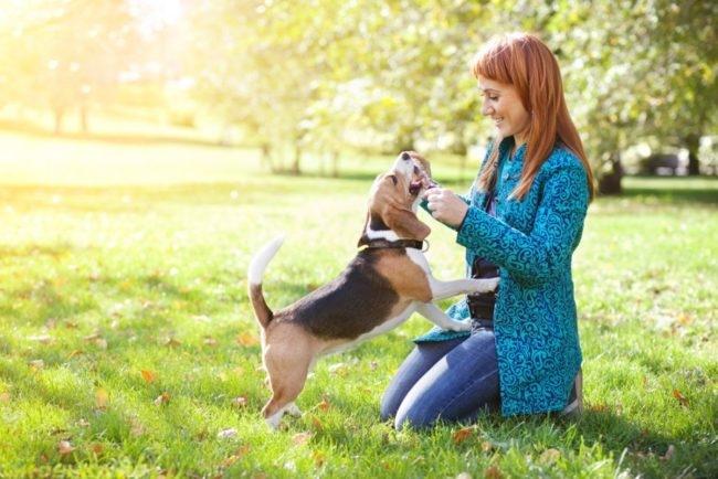 Собака на зелёной траве с хозяйкой