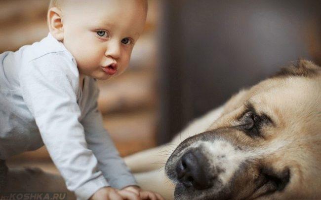 Ребёнок и собака лежащая на боку