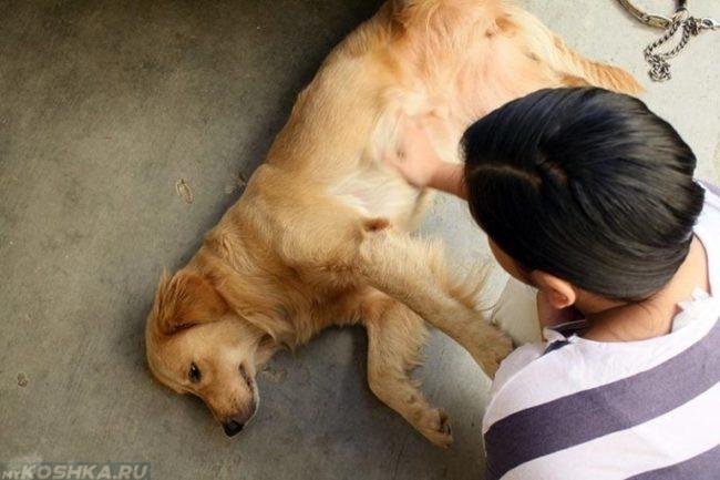 Судороги у собаки после родов