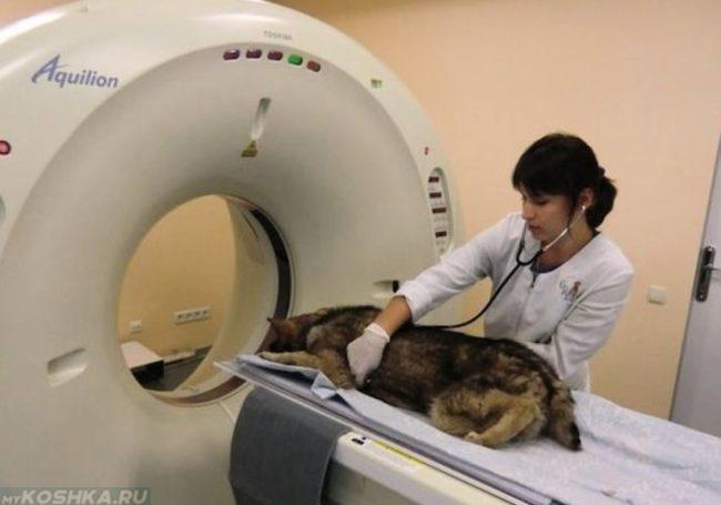 Компьютерная томография для собаки