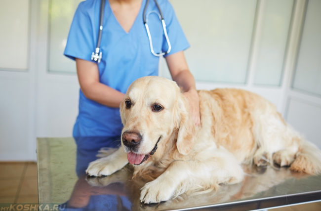 Собака на столе у ветеринара