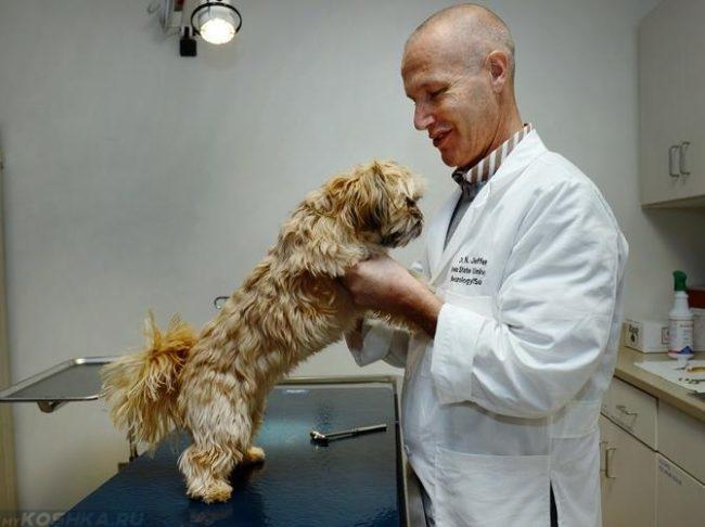 Собака придерживаемая за лапы ветеринаром