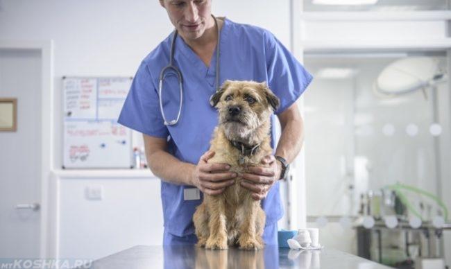 Пёс на столе у ветеринара