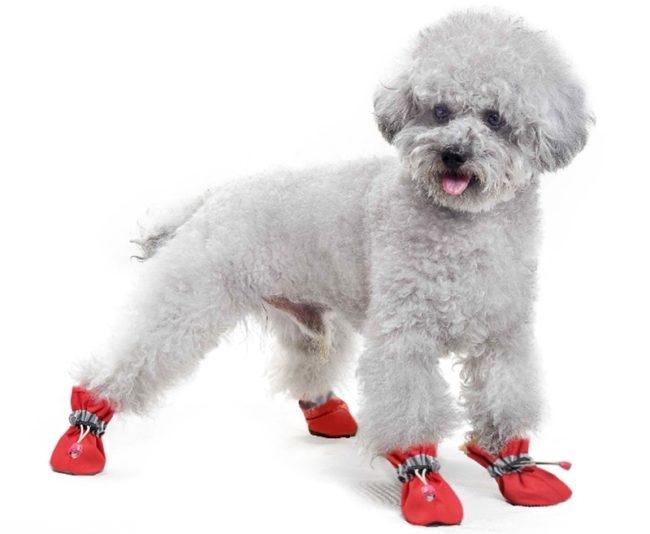 Собака в обуви красного цвета