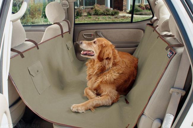 Собака на заднем сиденье в автомобиле
