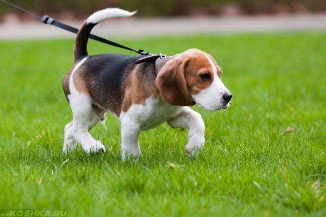 Выгул собаки на зелёной траве