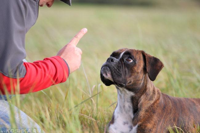 Жест показанный собаке во время дрессировки