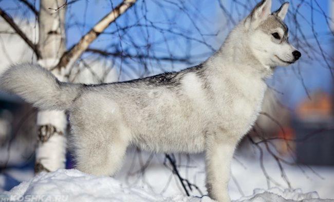 Собака зимой возле дерева