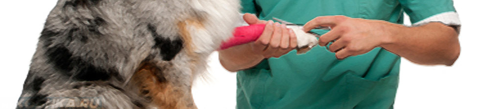 Врач берёт на анализ крове из вены у собаки