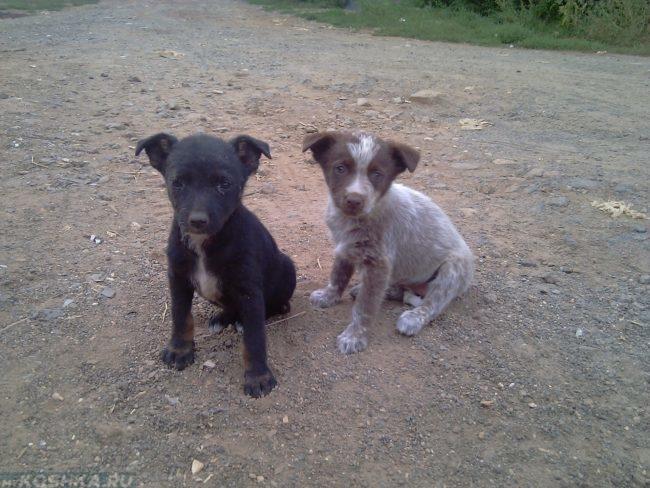Две бездомные собаки на дороге