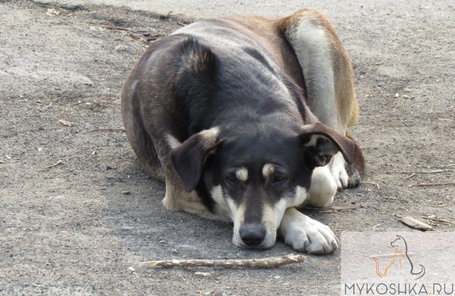 Простуженная собака лежит на полу