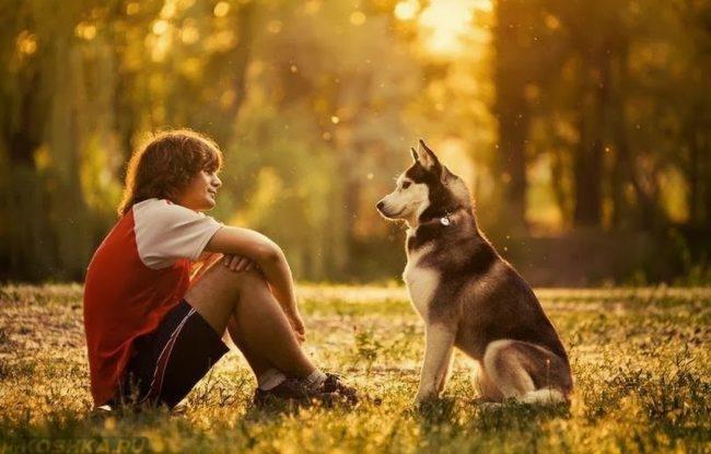 Человек и собака сидящие друг на против друга