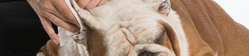 Чистка среднего уха у собаки