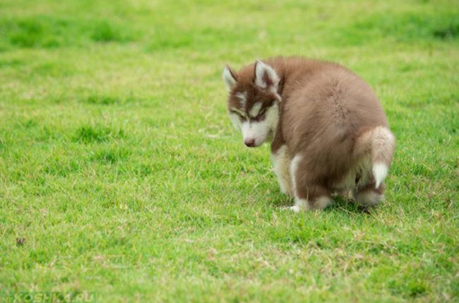 Диарея у собаки на зелёной полянке