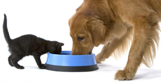 Чёрная кошка и коричневая собака