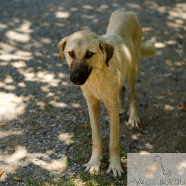 Худая больная уличная собака