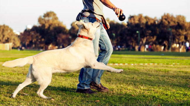Игра с собакой на зелёной траве