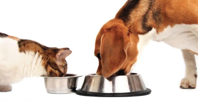 Собака и кошка употребляющие пищу из мисок