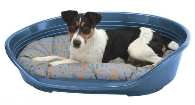 Собака в лежанке с подушкой