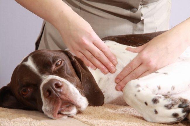Массаж собаке лежащей на боку