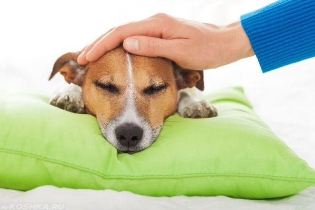 Собака положившая голову на зелёную подушку