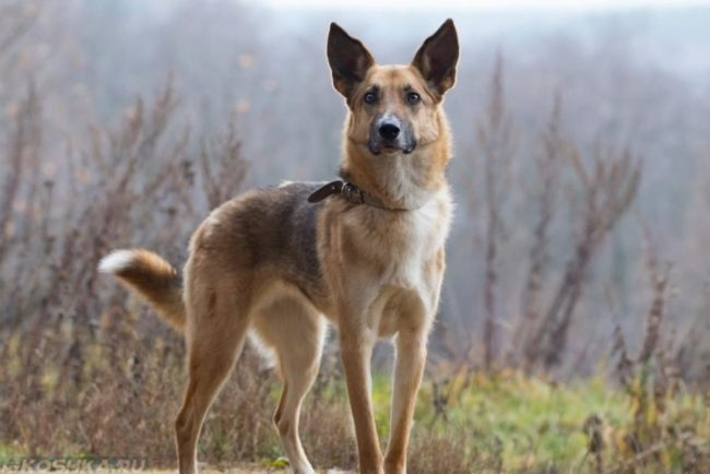 Молодая собака на природе