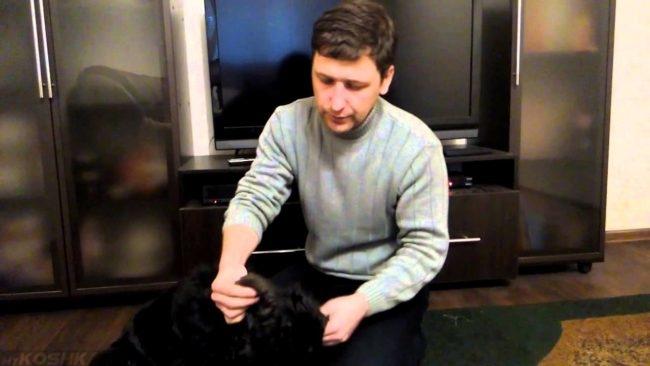 Осмотр собаки в квартире