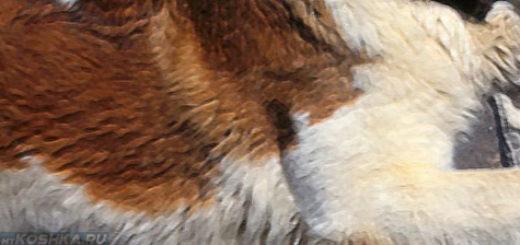Остеохондроз у собаки большой породы