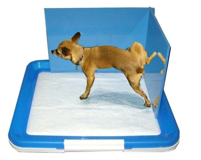 Собака в лотке синего цвета