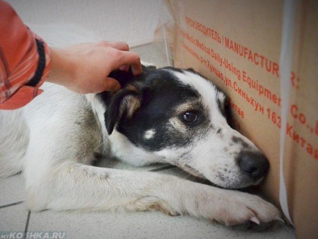 Роды у собаки: признаки начала и процесс, отошла пробка, что делать