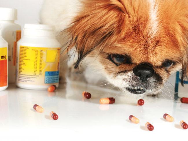 Пробиотики на столе и собака
