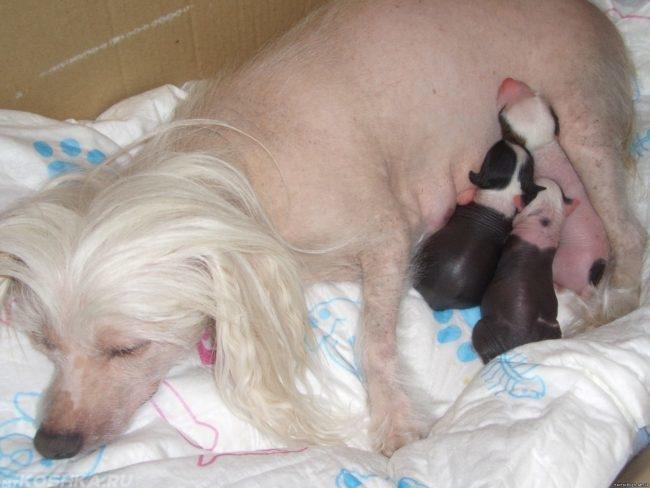 Собака и родившиеся щенки