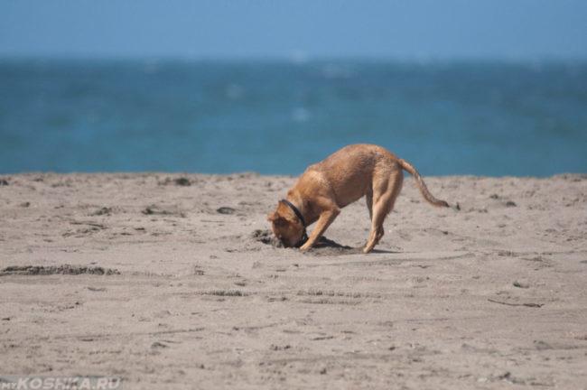 Собака и песок на фоне моря