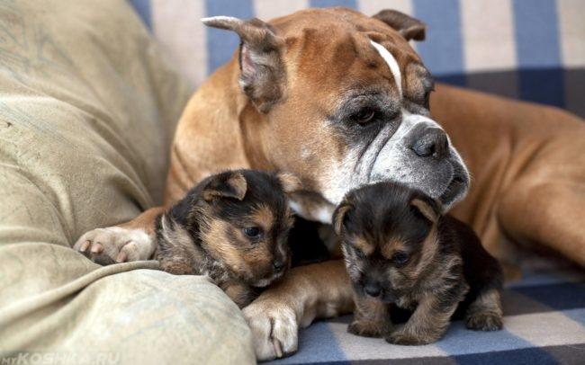 Собака с щенками на клетчатом одеяле