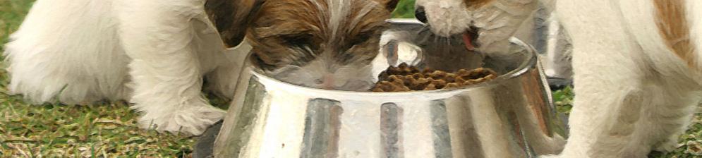 Два щенка едят сухой корм из миски