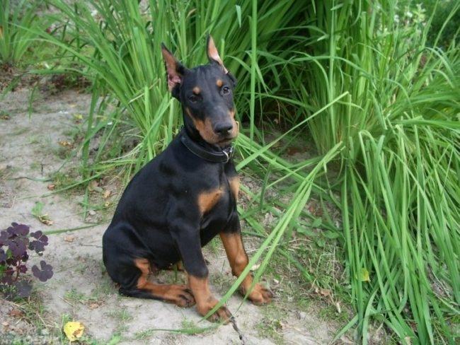 Собака сидящая на земле у травы