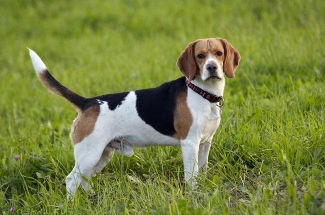 Взрослая собака на зелёной траве